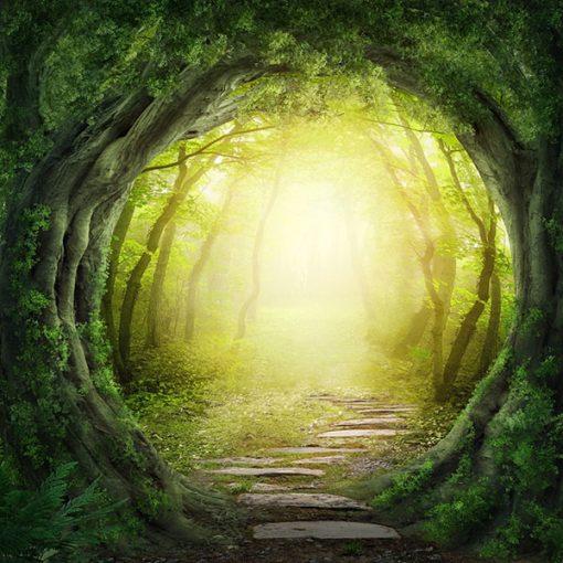 Vinilo Bosque Verde