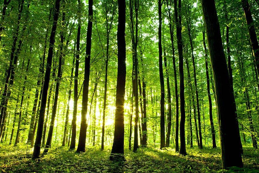 Fotomural de Bosque Verde en Vinilo Tienda Vinilos PUBLIPAUL